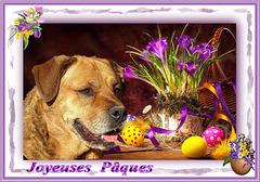 Joyeuses Pâques ! Happy Easter ! [ON EXPLORE]