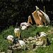 20170527 1742CPw [D~LIP] Heiliger Ibis (Syrmaticus aethiopicus), Rosapelikan (Pelecanus onocrotalus), Vogelpark Detmold-Heiligenkirchen