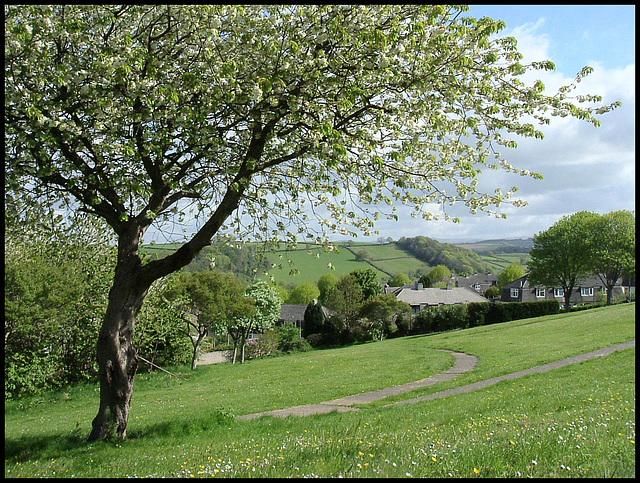 Agaton field in spring