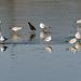 Vögel auf dem Eis