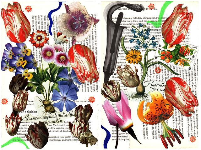 flower remedies 1 & 2
