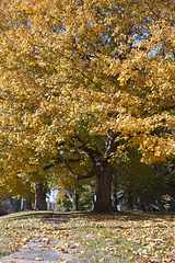 Fall Tree 2018