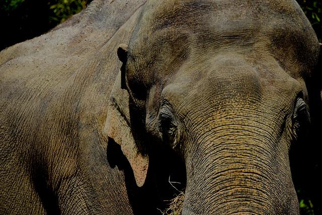 Elefantenlandschaft
