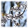 Spring is blooming.