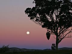 Coucher de pleine Lune sur fond de ciel coloré à l'aube (on EXPLORE)