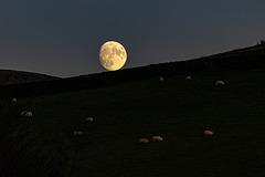 A resting Moon