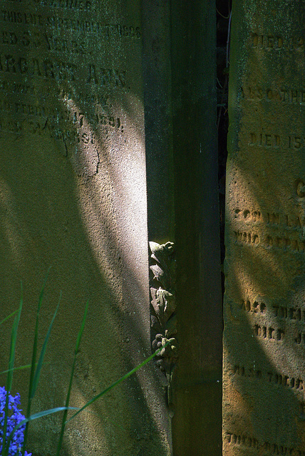 Light And Shadows At Preston Cemetery, North Tyneside