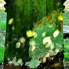 Dappled Light and Lichen