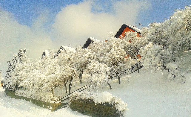 Winter motive