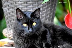 Black Cat :))