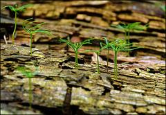 Bald Wald