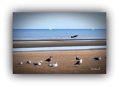 En mer du Nord ... ***   North Sea