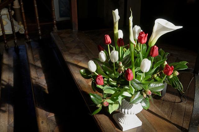 Fleurs fraîches au soleil