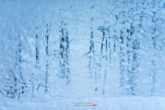 Un pas dans l'hiver IMGP0197