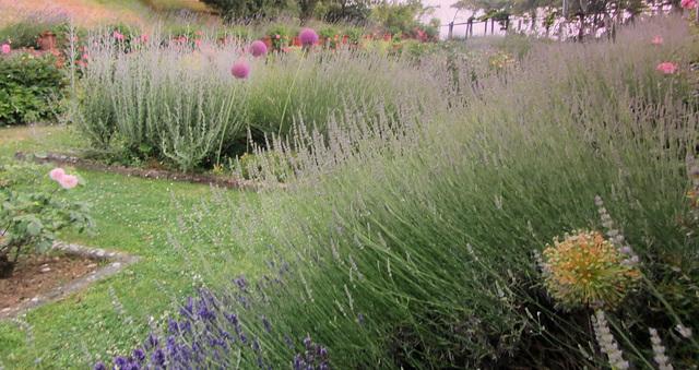 HFF!!! in a  Misty Secret Garden :-)