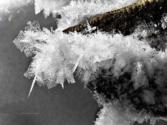 Eisblumen - ice flowers