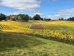 HFF....from the vineyard