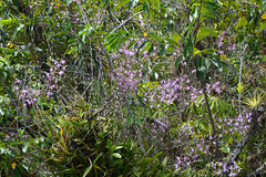 Guatemala, Jungle in the Chocón Machacas Protected Biotope