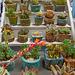 Peng succulents