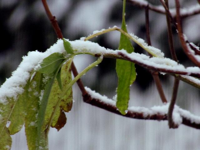 Première neige.....