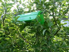 Apfelfruchtfliegenfalle