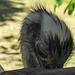 20170527 1753CPw [D~LIP] Emu, Vogelpark Detmold-Heiligenkirchen