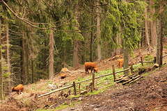 Ausflug in den Wald - HFF und ein schönes Wochenende