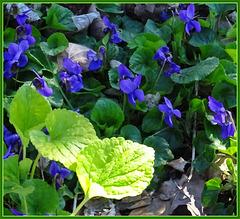 ein Frühlingsbild vom Waldboden
