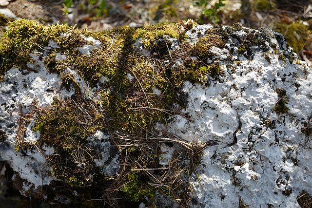 rocher, blanc, mousse, Castellane
