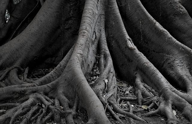 Nur eine Wurzel