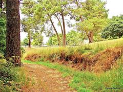 Path To River Walk.