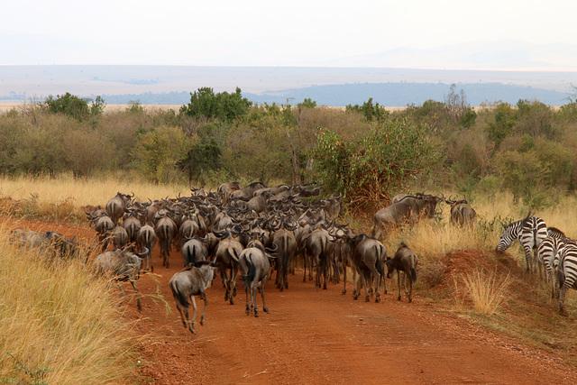 Heading towards the Mara river