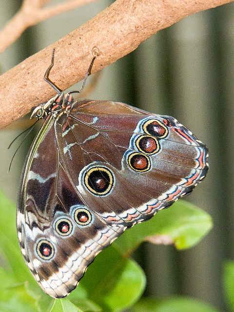 Chester zoo butterfly house. (3)