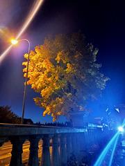 Night enchantment