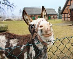 Kogel, Happy Fence Friday !