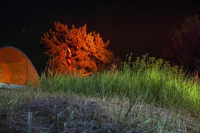 Sommererinnerungen - Der rote Baum