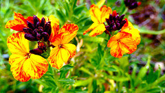 Un bouquet de senteur du jardin...