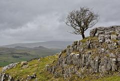 A Yorkshire Dales  scene