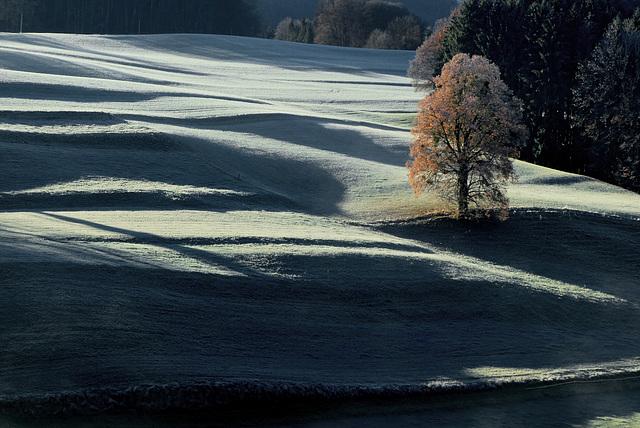 Ein frostiger Morgen