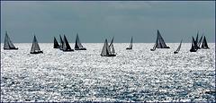 la regata di bolina contro luce e contro vento