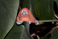 Noch ein eigener Orang-Utan :-)