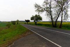 Landstraße in der Uckermark