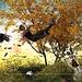 """Fall (Herbst) oder """"ein bisschen Spass muss sein"""" :-)"""