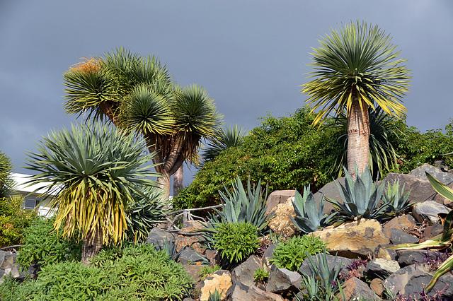 Das grüne Madeira