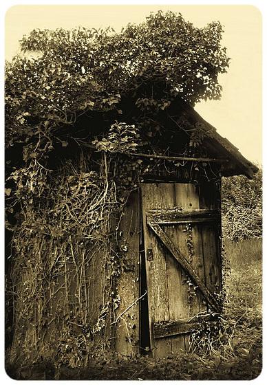 La vieille cabane