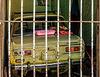 Behind bars, Trinidad, Cuba > HFF - HAPPY FENCE FRIDAY