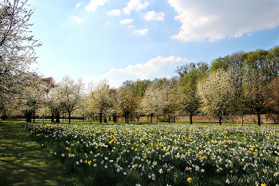 Im Kirschgarten