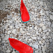 two little red shoes