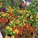 BUGA in Erfurt - Blütenpracht über Blütenpracht