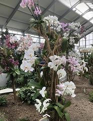 BUGA in Erfurt, Orchideenhaus